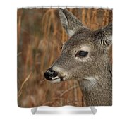 Portrait Of  Browsing Deer Shower Curtain