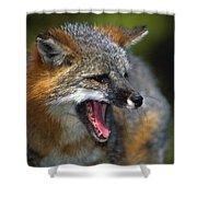 Portrait Of Gray Fox Barking Shower Curtain