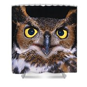 Portrait Of Great Horned Owl Shower Curtain