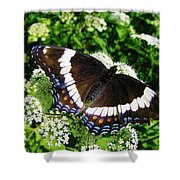 Posing Butterfly Shower Curtain