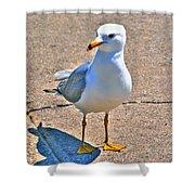 Posing Gull Shower Curtain