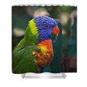 Posing Rainbow Lorikeet. Shower Curtain