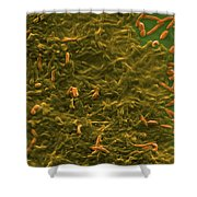 Potable Water Biofilm Shower Curtain by Science Source