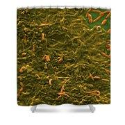 Potable Water Biofilm Shower Curtain
