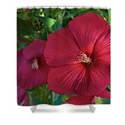 Potchen's Hibiscus Shower Curtain
