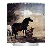 Potter: Horses, 1649 Shower Curtain