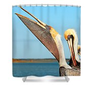 Pouch And Preen Shower Curtain