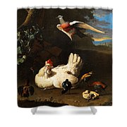 Poultry Shower Curtain