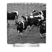 Pourquoi Pas Les Vache Shower Curtain