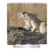 Prairie Dog Pair Grasslands Np Shower Curtain