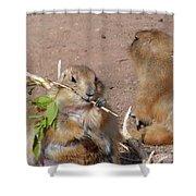 Prairie Dogs Shower Curtain