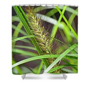 Prairie Dropseed Shower Curtain