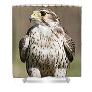 Prairie Falcon Perches On The Ground Shower Curtain