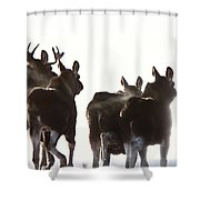 Prairie Moose Saskatchewan Shower Curtain