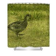 Prarie Chicken At Battle Of Little Bighorn Site Shower Curtain
