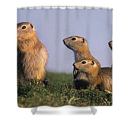 Prarie Dog Family Shower Curtain