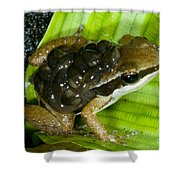 Pratts Rocket Frog With Young Shower Curtain
