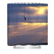 Predator Drone In The Minds Of Fish Shower Curtain
