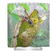 Predatory Wasp Hunts Spider Shower Curtain