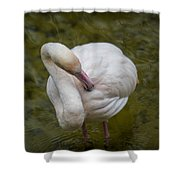 Preening. Shower Curtain