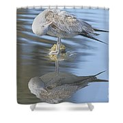 Preening My Feathers Shower Curtain