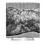 Prehistory: Engraving Shower Curtain