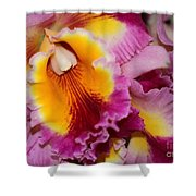 Pretty And Colorful Orchids Shower Curtain