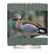 Pretty Duck  Shower Curtain