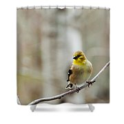 Pretty Finch Shower Curtain