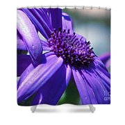 Pretty In Pericallis Shower Curtain by Rory Sagner