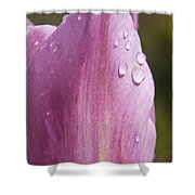 Pretty In Pink 4 Shower Curtain