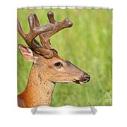 Pretty In Velvet Shower Curtain