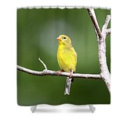 Pretty Little Lady Shower Curtain