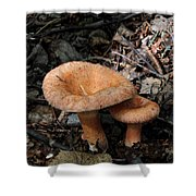 Pretty Mushrooms Shower Curtain