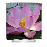 Pretty Pink Lotus Shower Curtain