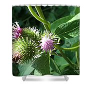 Pretty Prickles Shower Curtain