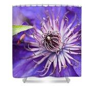 Pretty Purple Clematis Shower Curtain