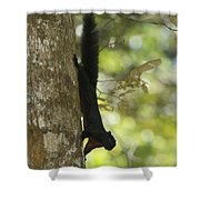 Prevosts Squirrel Facing Downward Shower Curtain