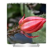 Prickly Bud Shower Curtain