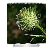 Prickly Globe Shower Curtain