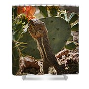 Prickly Lunch  Shower Curtain