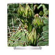 Prickly Pear Cactus Buds Shower Curtain