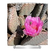 Prickly Pear Cactus Fertilized By Honey Bee Shower Curtain