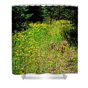 Priest Lake Trail Series Iv - Small Meadow Shower Curtain