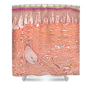 Primate Baboon Finger Pad Shower Curtain