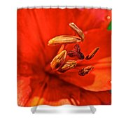 Prime Red Shower Curtain