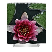 Primo Waterlily Shower Curtain