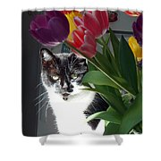 Princess The Cat And Tulips Shower Curtain