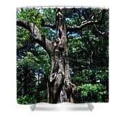 Princess Tree Shower Curtain