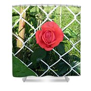 Princesse Rose Shower Curtain